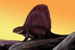 Dimetrodon
