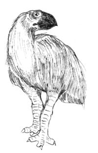 Gastornis